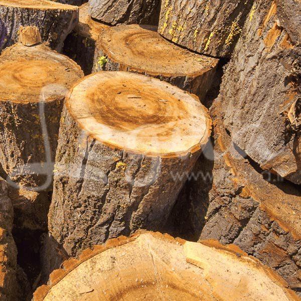 قطعات تنه درخت