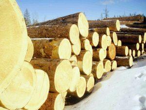 چوب درختان