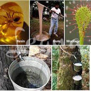 رزین طبیعی(شیره درخت یا صمغ)