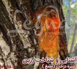 صمغ درختان (رزین طبیعی)